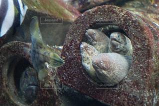 魚の写真・画像素材[3170950]