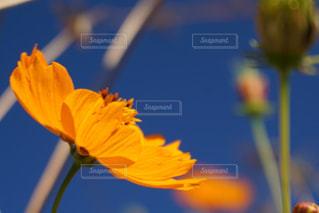 黄色い花の写真・画像素材[3172941]