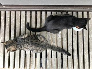 黒猫とトラ猫の写真・画像素材[3676109]
