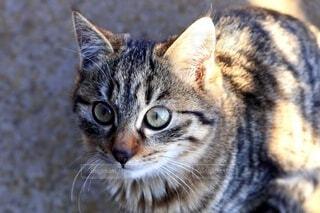 子猫のクローズアップの写真・画像素材[3686557]