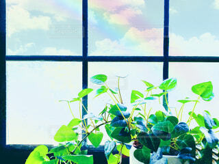 窓辺の観葉植物 虹の写真・画像素材[4503122]
