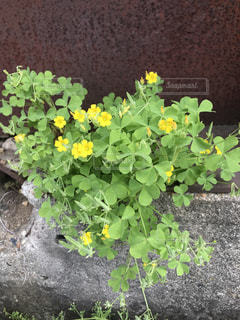 花園のクローズアップの写真・画像素材[3173915]
