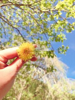 森の中の植物を手に持つの写真・画像素材[3175278]