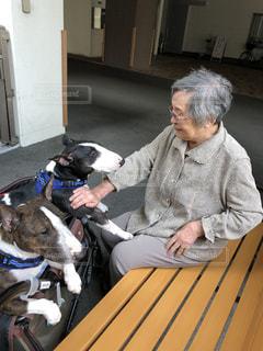 犬のベンチに座っている人の写真・画像素材[1120367]
