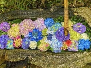 カラフルな花のグループの写真・画像素材[3315227]