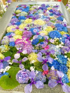 紫色の花で満たされた花瓶の写真・画像素材[3315237]
