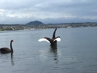 水の体の隣で水の中を泳ぐ鳥の写真・画像素材[3181899]