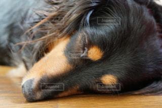 犬 - No.130986