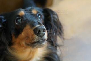 犬の写真・画像素材[131348]