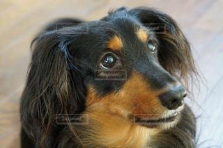 No.131349 犬