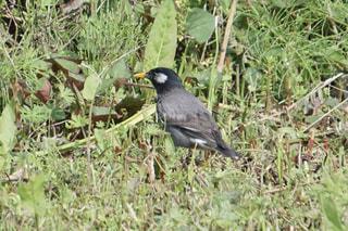 鳥の写真・画像素材[519328]