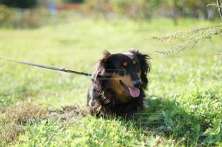 犬 - No.539721