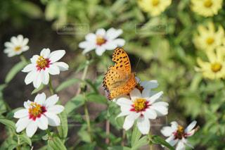 近くの花のアップ - No.887758