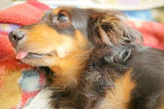 近くに犬のアップの写真・画像素材[903906]