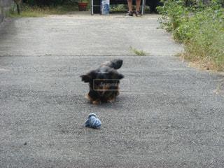 あそぶ犬の写真・画像素材[1781421]