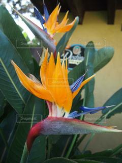 花の写真・画像素材[132778]