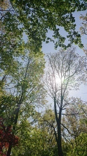 木のクローズアップの写真・画像素材[3216940]