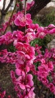 植物の上のピンクの花のクローズアップの写真・画像素材[3216939]