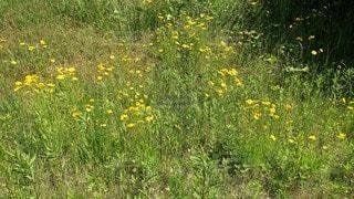 野原の花の写真・画像素材[3252932]