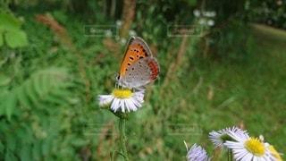 花の上のカラフルな蝶の写真・画像素材[3308243]