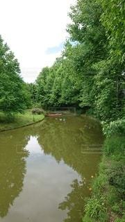 緑の川の写真・画像素材[3378429]