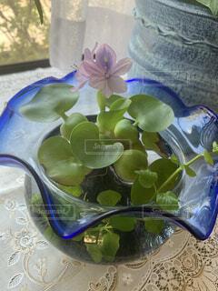 水草の花の写真・画像素材[3736913]