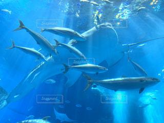 水族館の写真・画像素材[3177601]