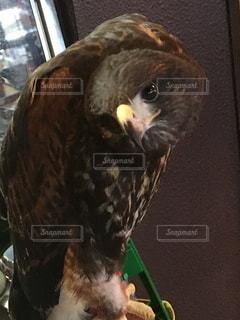 鳥の写真・画像素材[267861]