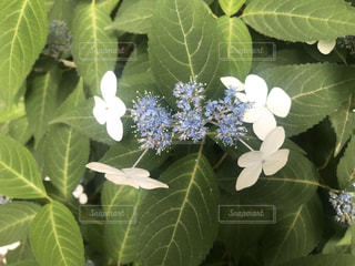 緑の植物のクローズアップの写真・画像素材[3178739]