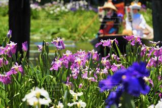 紫色の花のクローズアップの写真・画像素材[3187064]