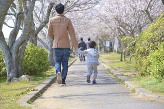 桜咲く公園を散歩する親子の写真・画像素材[3223012]