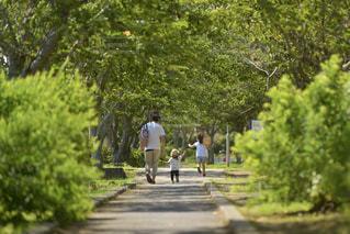 新緑の公園を散歩する親子の写真・画像素材[3244030]