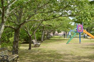 新緑の公園で過ごす家族の写真・画像素材[3254485]