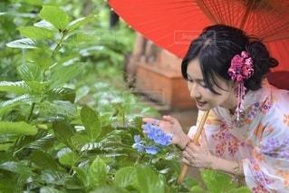 和傘をさす美しい浴衣女性の写真・画像素材[3490632]