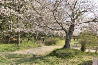公園の木の写真・画像素材[4292502]