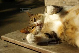 猫の写真・画像素材[234315]