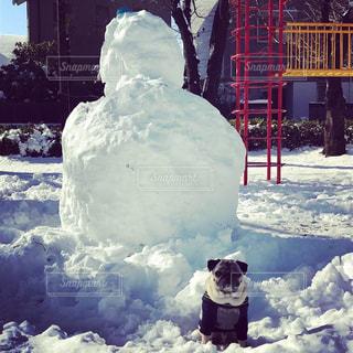 雪だるまとパグの写真・画像素材[993279]