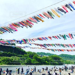 相模川泳げ鯉のぼりの写真・画像素材[2290989]