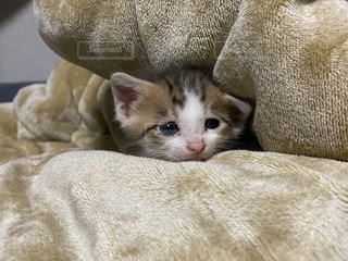 ベッドに横たわる猫の写真・画像素材[3219480]