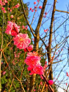 花の写真・画像素材[132052]