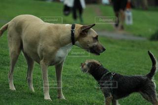 No.248793 犬