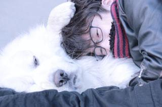 犬 - No.374753