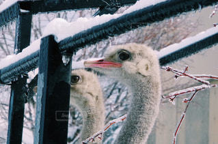 冬の写真・画像素材[129057]