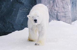 冬の写真・画像素材[129058]