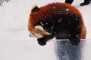 冬の写真・画像素材[129059]