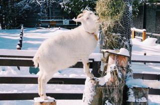 冬の写真・画像素材[129061]