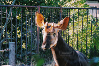 動物の写真・画像素材[129064]