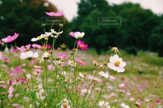 花の写真・画像素材[311789]