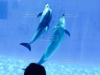 親子イルカの写真・画像素材[3185814]