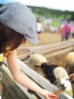 羊をかわいがっている人の写真・画像素材[3245661]